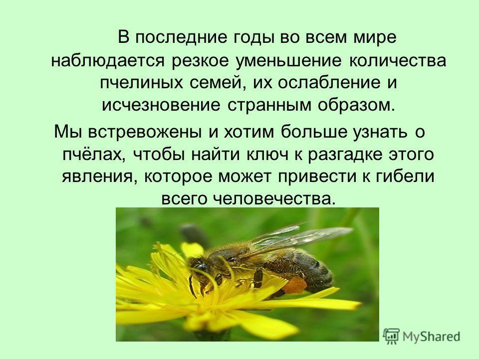 В последние годы во всем мире наблюдается резкое уменьшение количества пчелиных семей, их ослабление и исчезновение странным образом. Мы встревожены и хотим больше узнать о пчёлах, чтобы найти ключ к разгадке этого явления, которое может привести к г