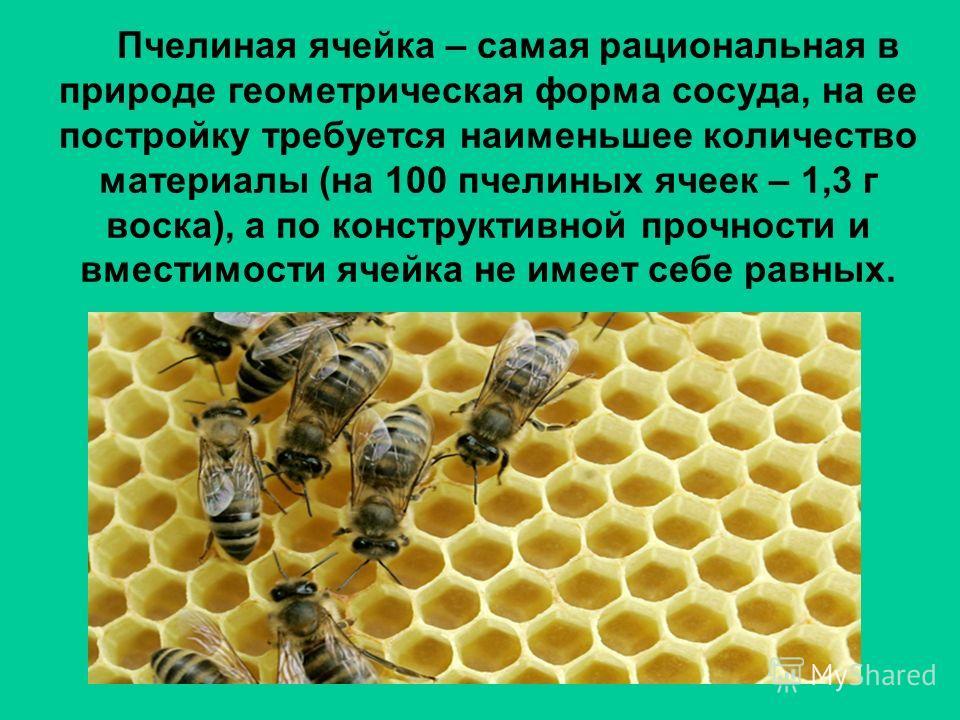 Пчелиная ячейка – самая рациональная в природе геометрическая форма сосуда, на ее постройку требуется наименьшее количество материалы (на 100 пчелиных ячеек – 1,3 г воска), а по конструктивной прочности и вместимости ячейка не имеет себе равных.