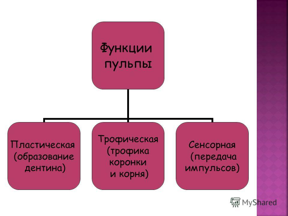 Функции пульпы Пластическая (образование дентина) Трофическая (трофика коронки и корня) Сенсорная (передача импульсов)