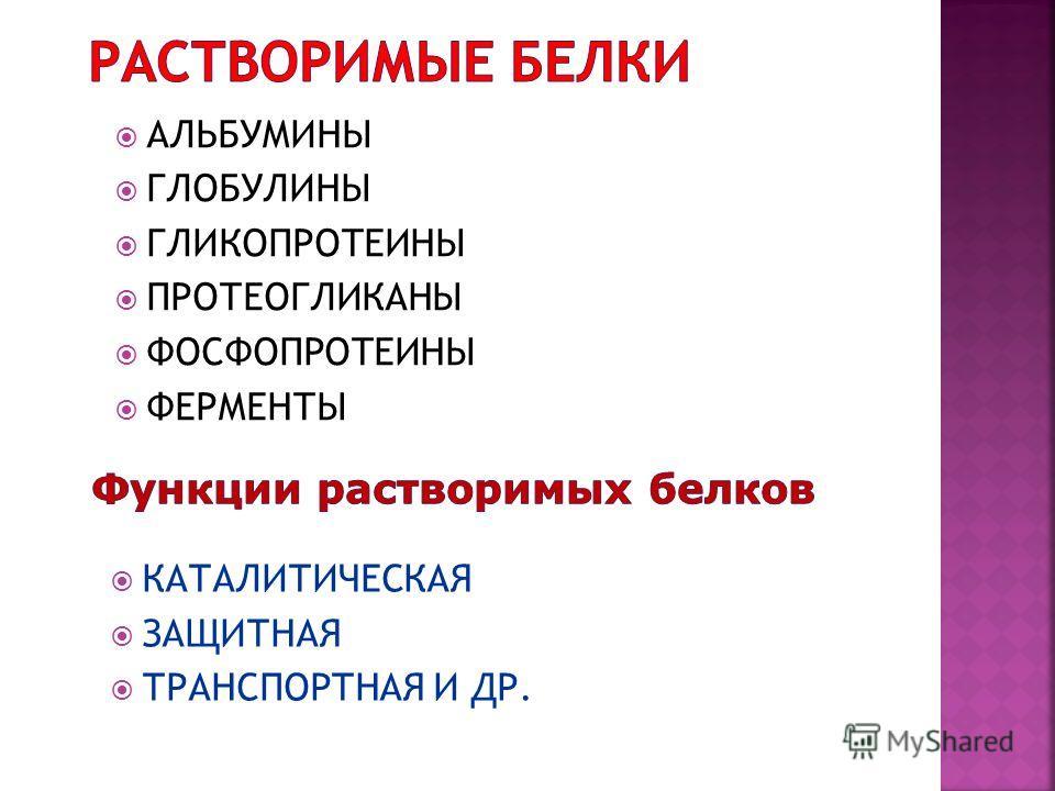 АЛЬБУМИНЫ ГЛОБУЛИНЫ ГЛИКОПРОТЕИНЫ ПРОТЕОГЛИКАНЫ ФОСФОПРОТЕИНЫ ФЕРМЕНТЫ КАТАЛИТИЧЕСКАЯ ЗАЩИТНАЯ ТРАНСПОРТНАЯ И ДР.