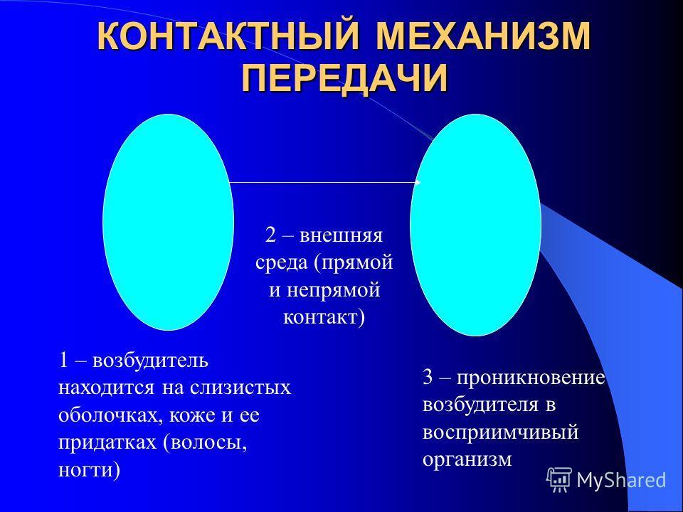 КОНТАКТНЫЙ МЕХАНИЗМ ПЕРЕДАЧИ 1 – возбудитель находится на слизистых оболочках, коже и ее придатках (волосы, ногти) 2 – внешняя среда (прямой и непрямой контакт) 3 – проникновение возбудителя в восприимчивый организм