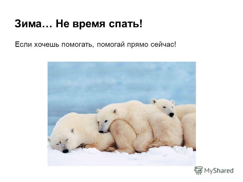 Зима… Не время спать! Если хочешь помогать, помогай прямо сейчас!