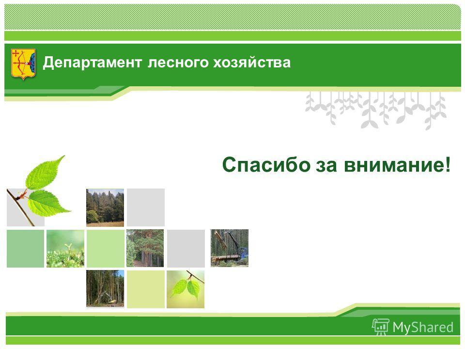 Департамент лесного хозяйства Спасибо за внимание!