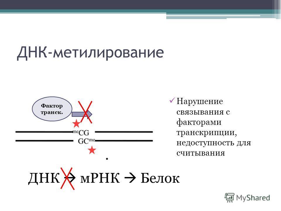 ДНК-метилирование Нарушение связывания с факторами транскрипции, недоступность для считывания Фактор транск. ДНК мРНК Белок