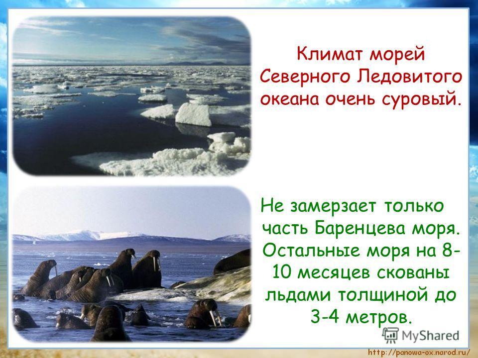 Климат морей Северного Ледовитого океана очень суровый. Не замерзает только часть Баренцева моря. Остальные моря на 8- 10 месяцев скованы льдами толщиной до 3-4 метров.