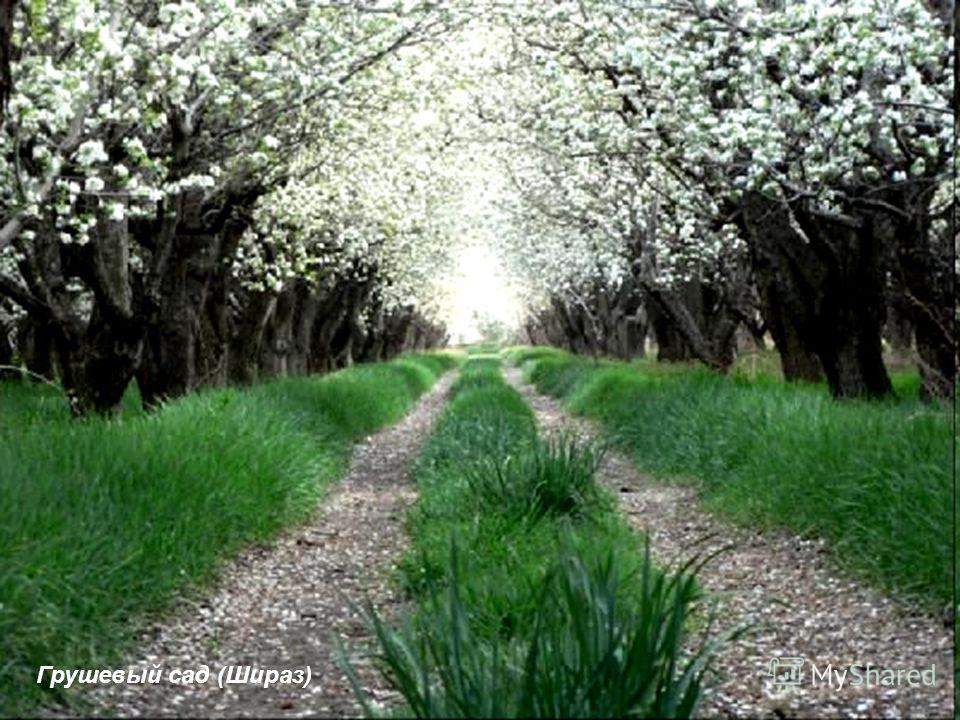 Грушевый сад (Шираз)
