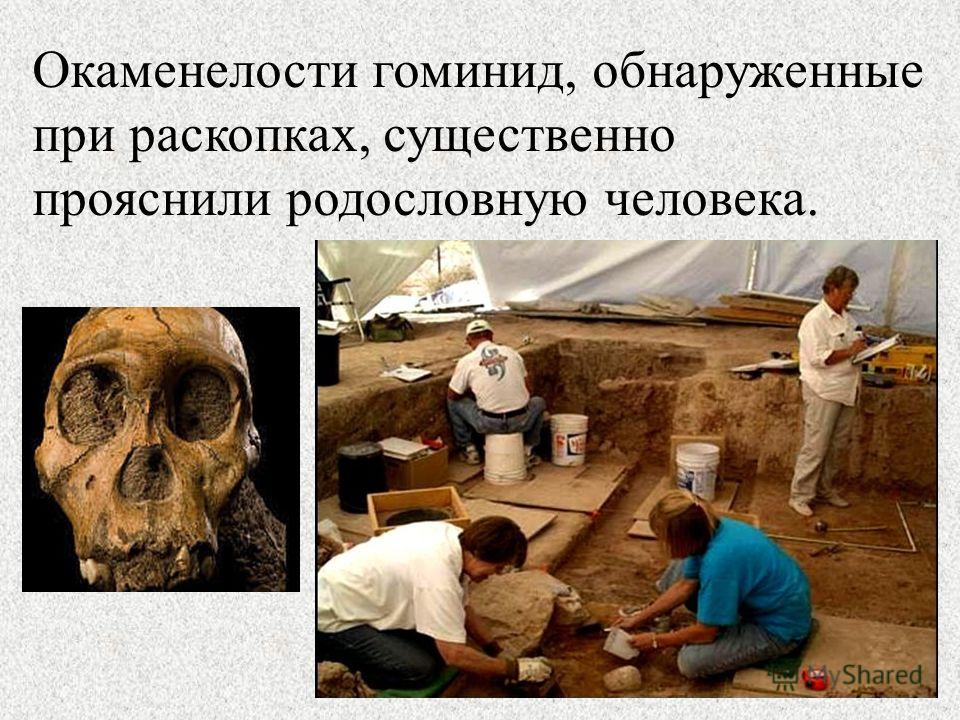 Окаменелости гоминид, обнаруженные при раскопках, существенно прояснили родословную человека.