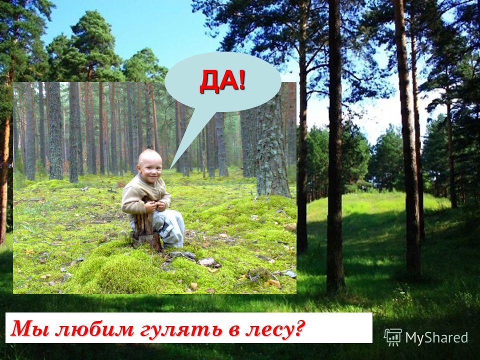 Мы любим гулять в лесу? ДА!