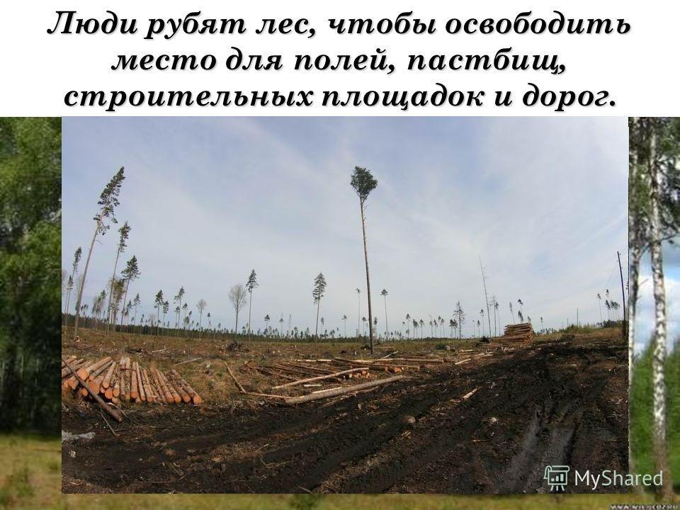 Люди рубят лес, чтобы освободить место для полей, пастбищ, строительных площадок и дорог.