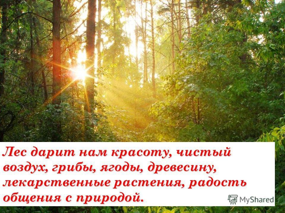Лес дарит нам красоту, чистый воздух, грибы, ягоды, древесину, лекарственные растения, радость общения с природой.