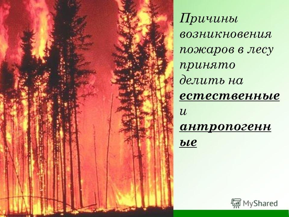 Причины возникновения пожаров в лесу принято делить на естественные и антропогенн ые
