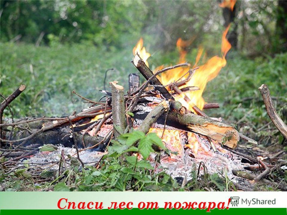 Спаси лес от пожара!