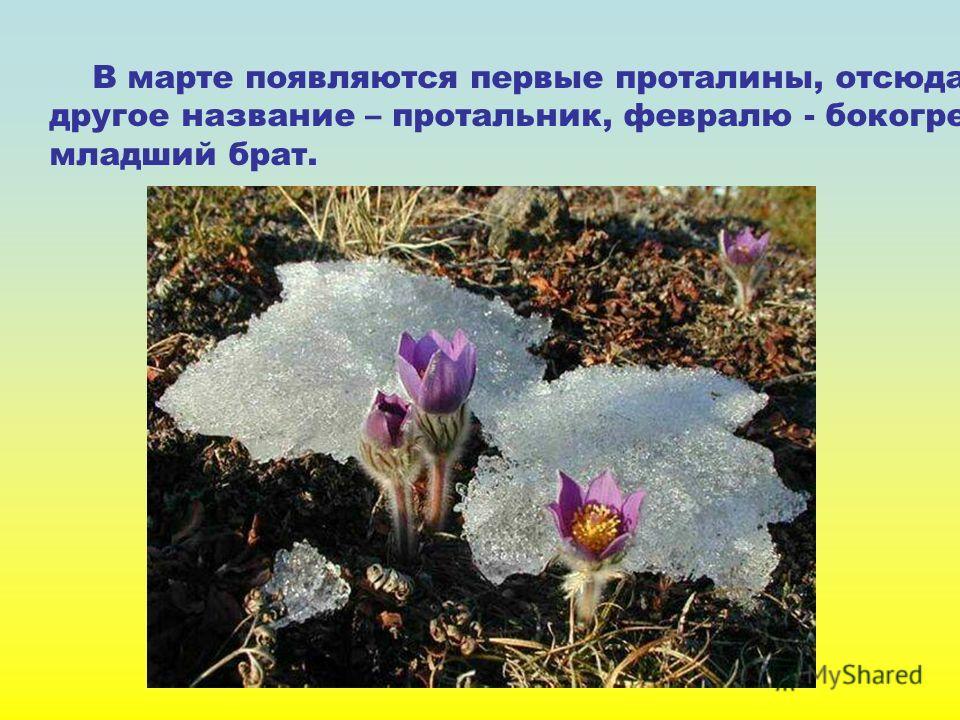 В марте появляются первые проталины, отсюда и другое название – протальник, февралю - бокогрею - младший брат.