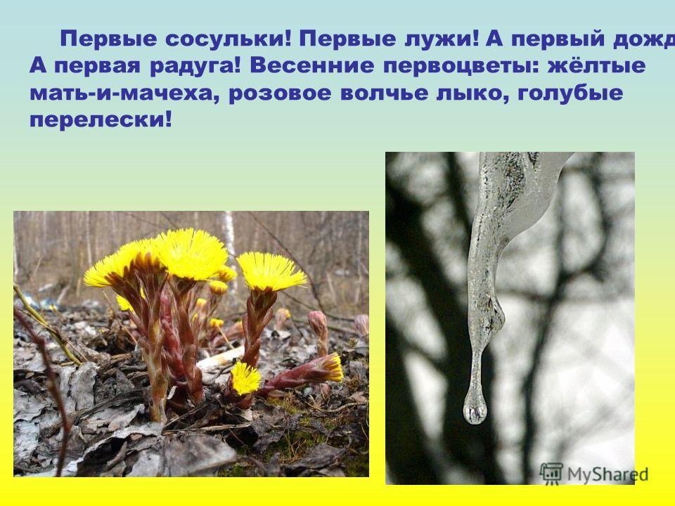 Первые сосульки! Первые лужи! А первый дождик! А первая радуга! Весенние первоцветы: жёлтые мать-и-мачеха, розовое волчье лыко, голубые перелески!