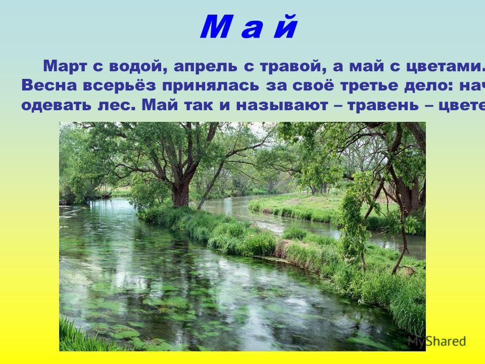 М а й Март с водой, апрель с травой, а май с цветами. Весна всерьёз принялась за своё третье дело: начала одевать лес. Май так и называют – травень – цветень.
