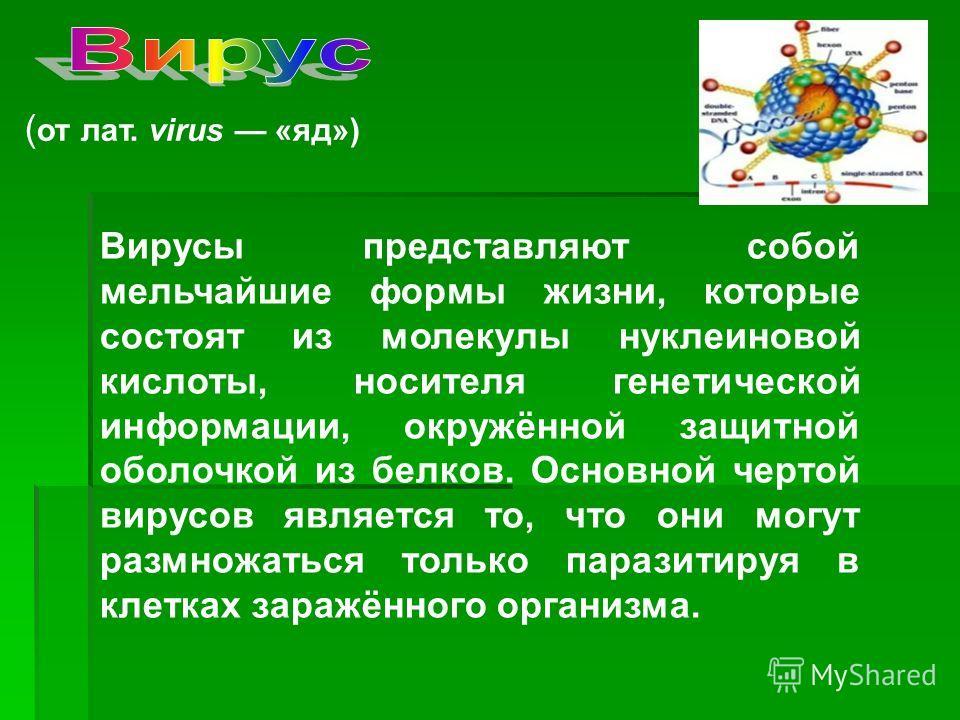 ( от лат. virus «яд») Вирусы представляют собой мельчайшие формы жизни, которые состоят из молекулы нуклеиновой кислоты, носителя генетической информации, окружённой защитной оболочкой из белков. Основной чертой вирусов является то, что они могут раз