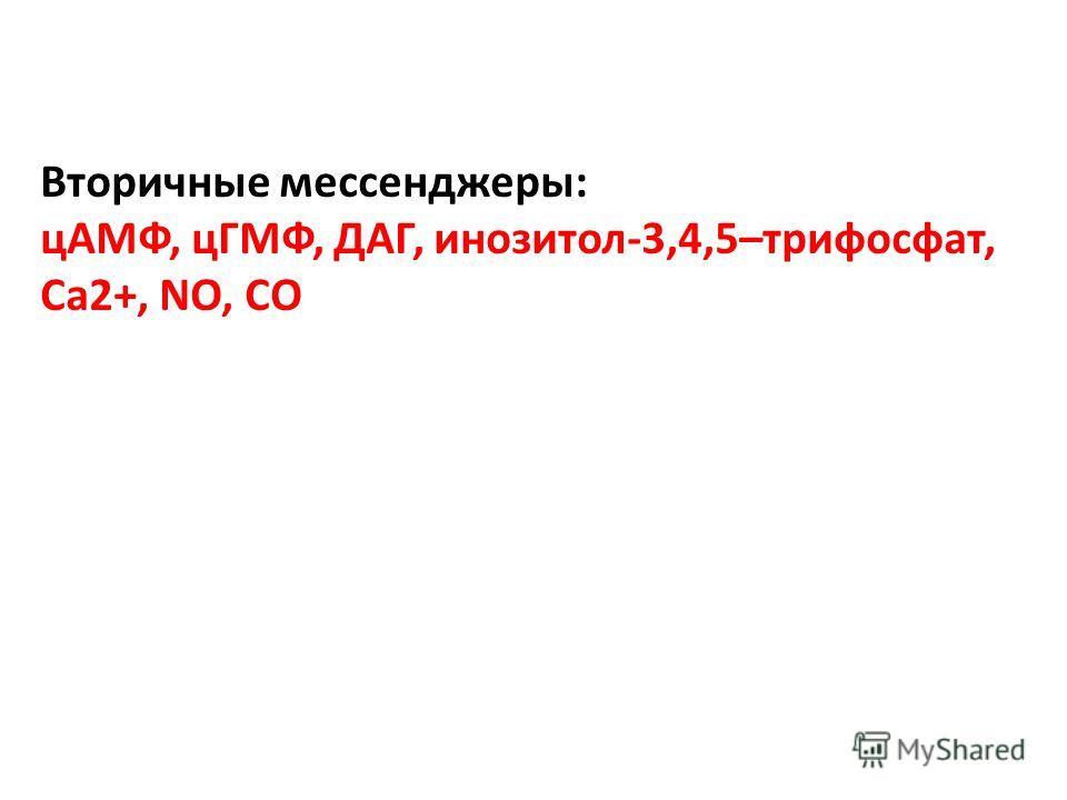 Вторичные мессенджеры: цАМФ, цГМФ, ДАГ, инозитол-3,4,5–трифосфат, Са2+, NO, СO