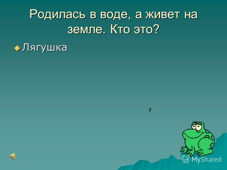 Родилась в воде, а живет на земле. Кто это? Лягушка Лягушка