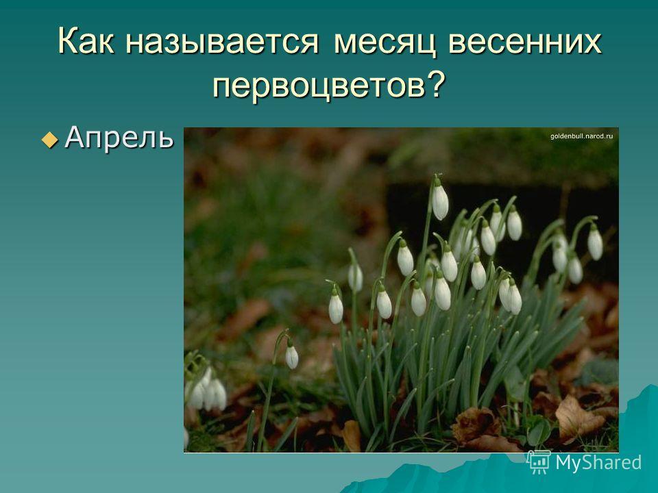 Как называется месяц весенних первоцветов? Апрель Апрель
