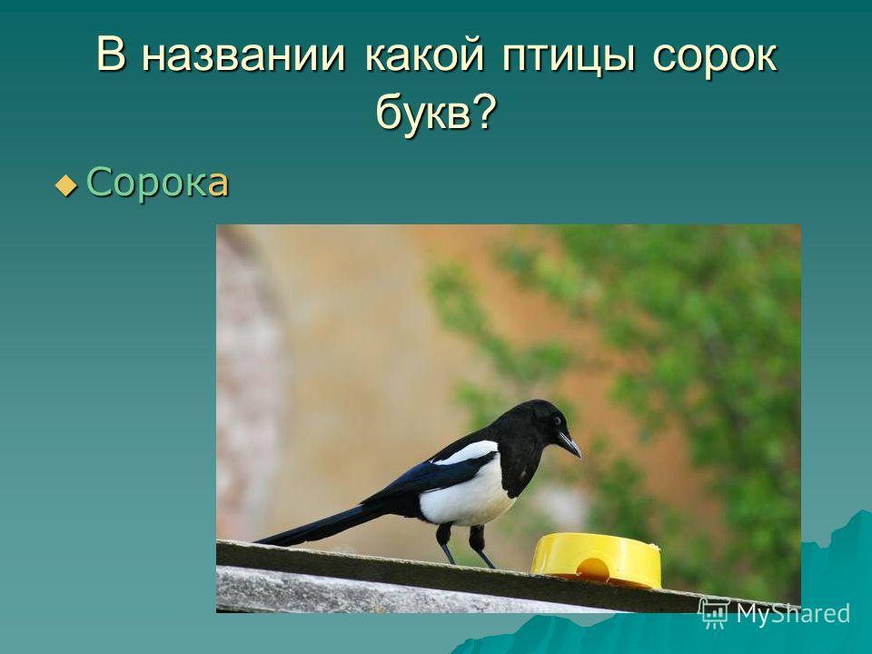 В названии какой птицы сорок букв? Сорока Сорока