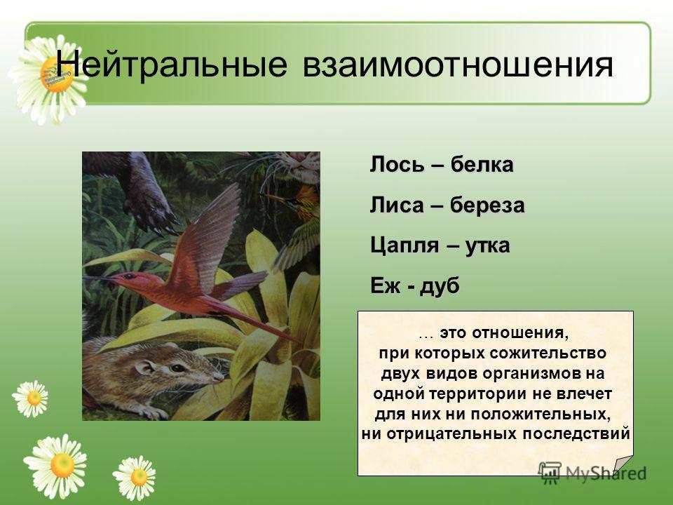 Нейтральные взаимоотношения Лось – белка Лиса – береза Цапля – утка Еж - дуб … это отношения, при которых сожительство двух видов организмов на одной территории не влечет для них ни положительных, ни отрицательных последствий