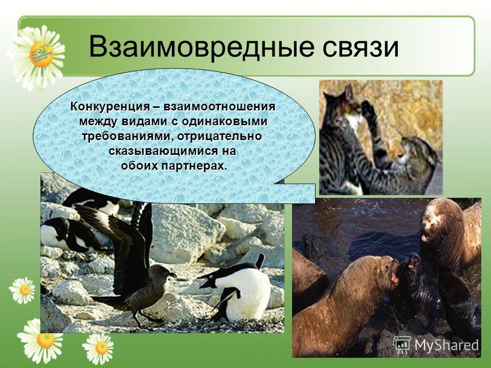 Взаимовредные связи Конкуренция – взаимоотношения между видами с одинаковыми требованиями, отрицательно сказывающимися на обоих партнерах.
