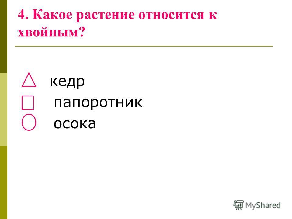 4. Какое растение относится к хвойным? кедр папоротник осока