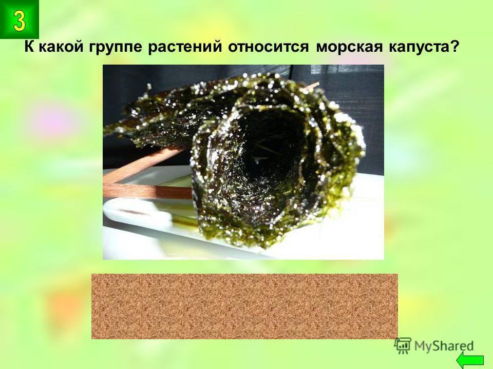 К какой группе растений относится морская капуста? водоросли