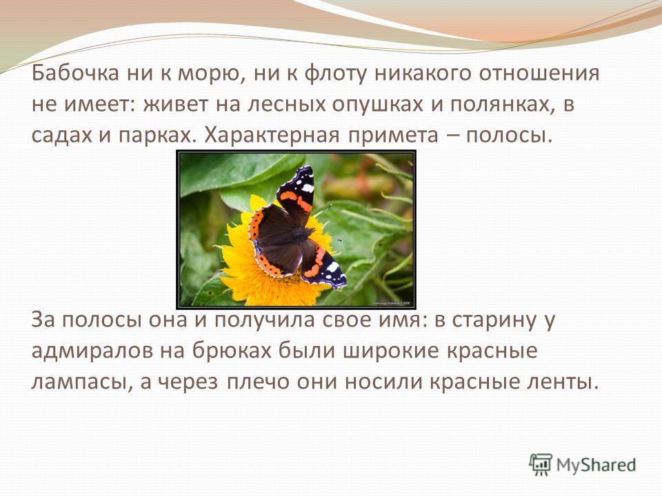 Бабочка ни к морю, ни к флоту никакого отношения не имеет: живет на лесных опушках и полянках, в садах и парках. Характерная примета – полосы. За полосы она и получила свое имя: в старину у адмиралов на брюках были широкие красные лампасы, а через пл