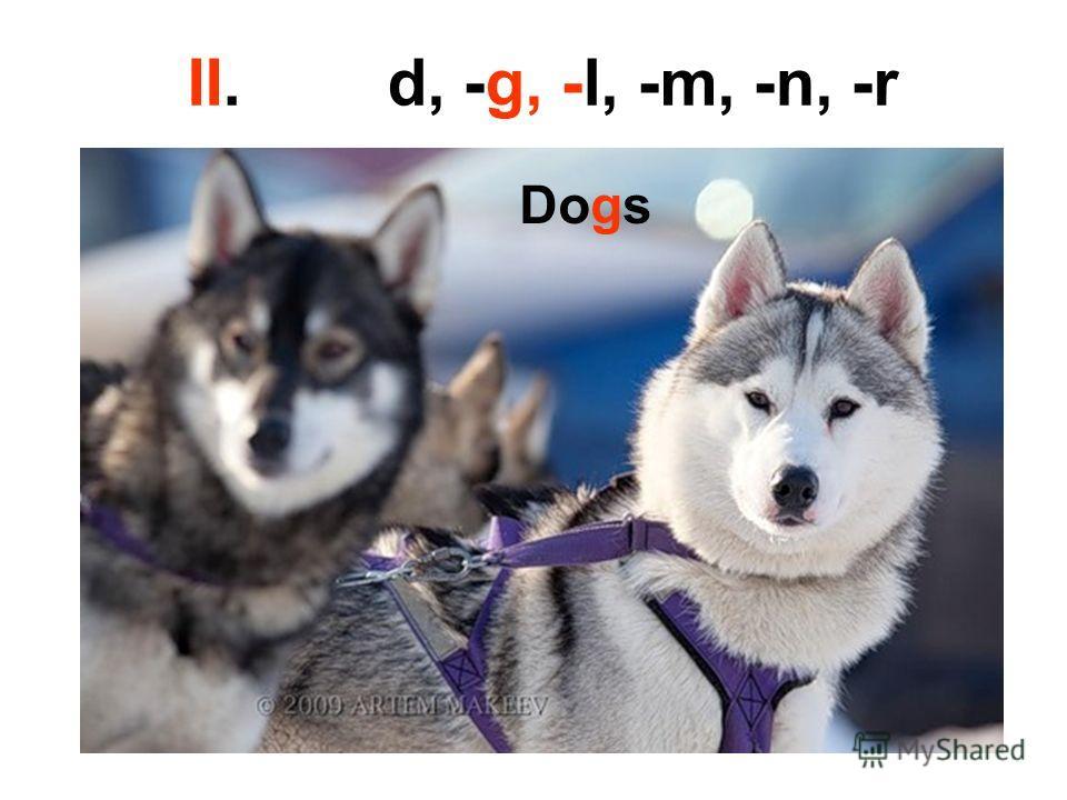 II. d, -g, -l, -m, -n, -r Dogs