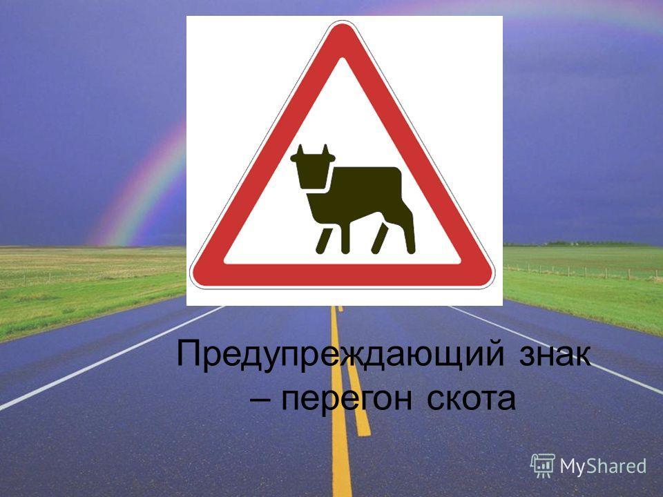 Предупреждающий знак – перегон скота