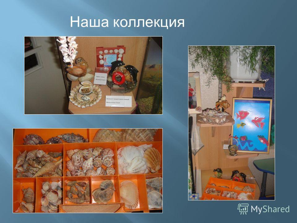 Наша коллекция