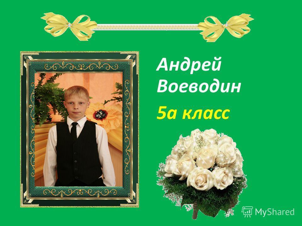 Андрей Воеводин 5а класс