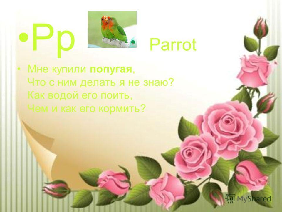 Pp Parrot Мне купили попугая, Что с ним делать я не знаю? Как водой его поить, Чем и как его кормить?