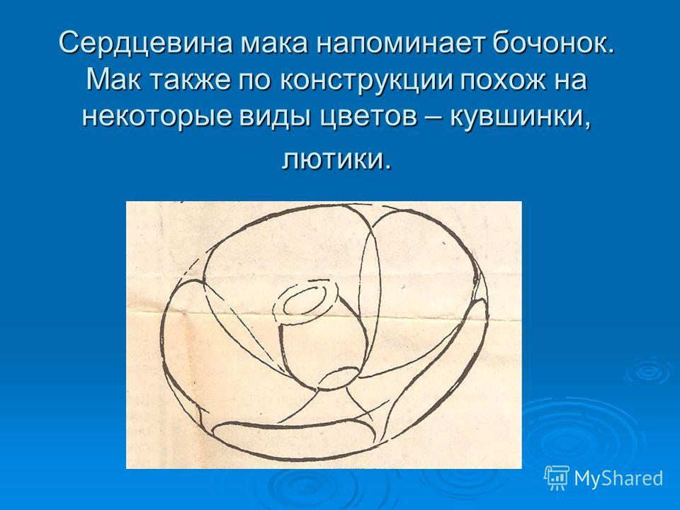 Сердцевина мака напоминает бочонок. Мак также по конструкции похож на некоторые виды цветов – кувшинки, лютики.