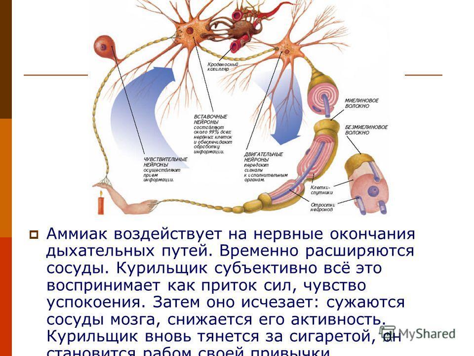 Аммиак воздействует на нервные окончания дыхательных путей. Временно расширяются сосуды. Курильщик субъективно всё это воспринимает как приток сил, чувство успокоения. Затем оно исчезает: сужаются сосуды мозга, снижается его активность. Курильщик вно