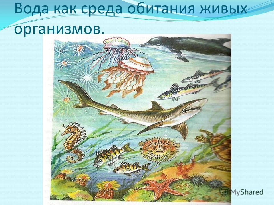 Вода как среда обитания живых организмов.