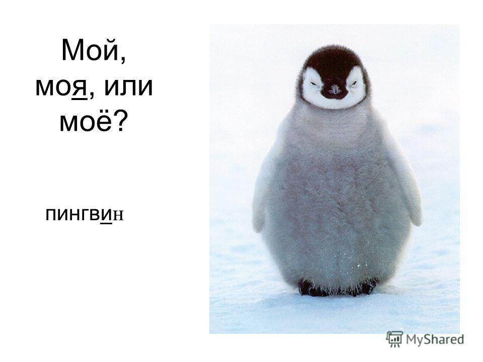 пингви н Мой, моя, или моё?