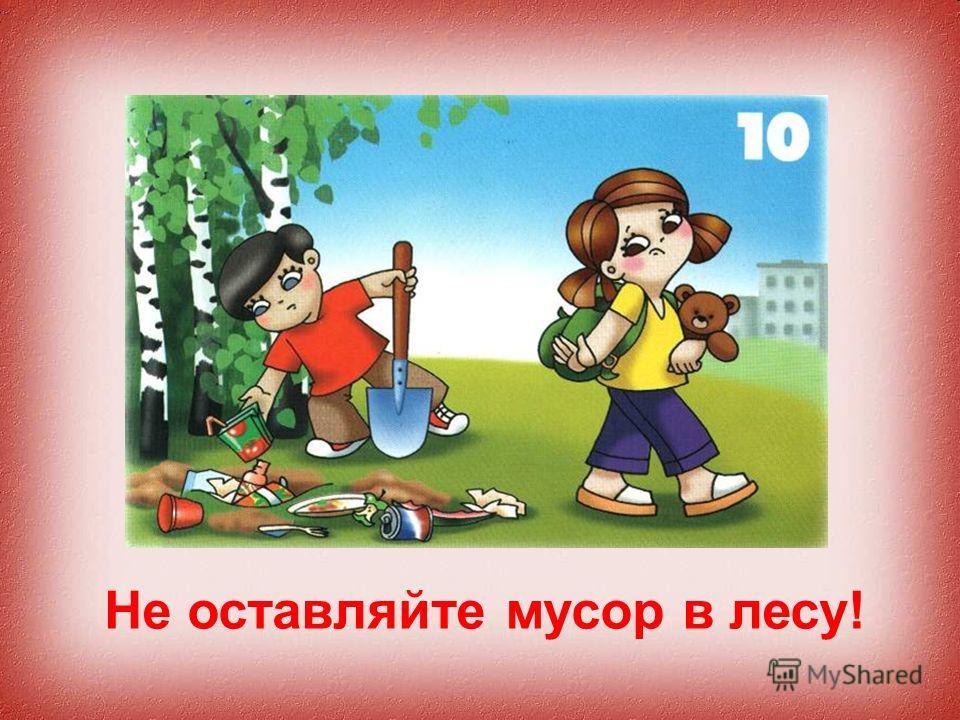 Не оставляйте мусор в лесу!