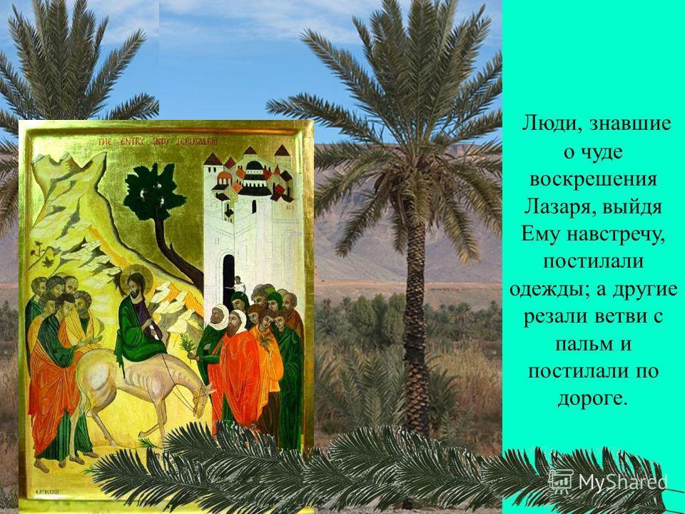 Люди, знавшие о чуде воскрешения Лазаря, выйдя Ему навстречу, постилали одежды; а другие резали ветви с пальм и постилали по дороге.