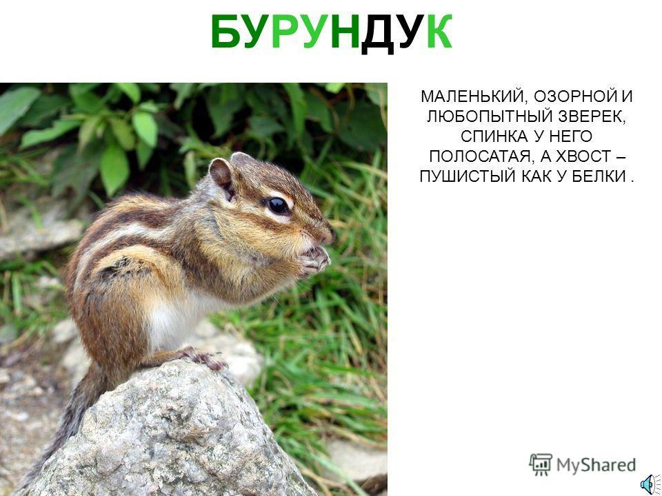 Тебетев Митрофан Алексеевич. «Кедровые шишки и орехи»
