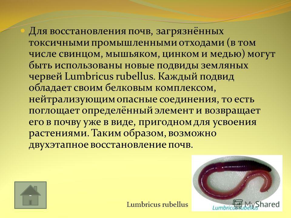 Для восстановления почв, загрязнённых токсичными промышленными отходами (в том числе свинцом, мышьяком, цинком и медью) могут быть использованы новые подвиды земляных червей Lumbricus rubellus. Каждый подвид обладает своим белковым комплексом, нейтра