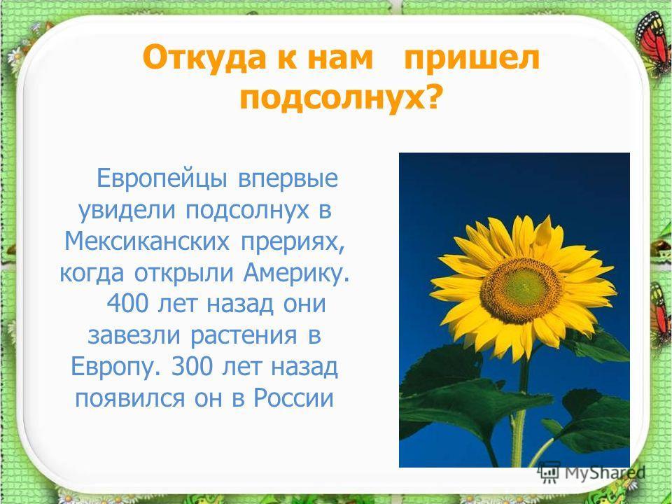 Презентация на тему Доклад на тему Культурные растения нашего  Реферат о культурном растении 2 класс