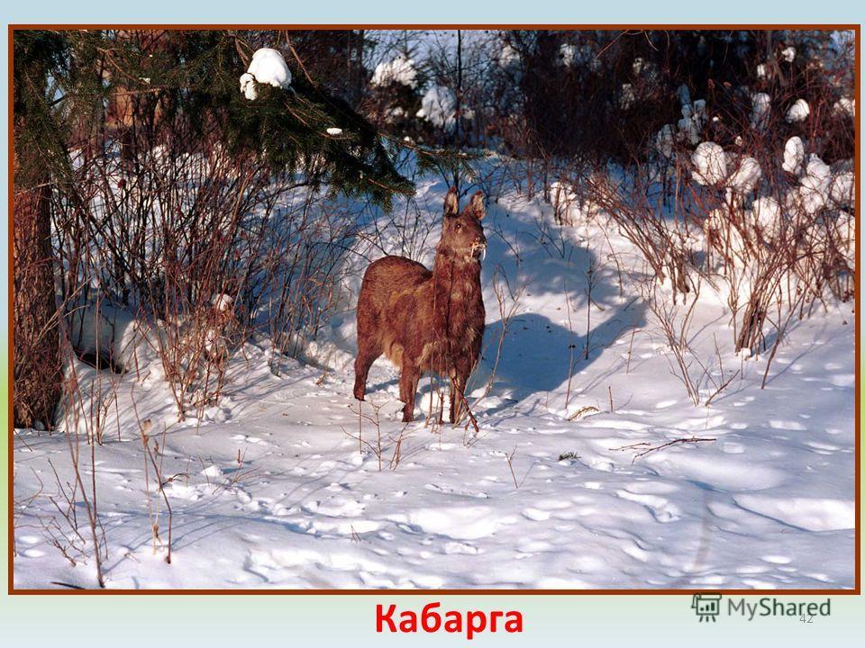 42 Баргузинский заповедник биосферный, в Российской Федерации, Бурятия, на северо- восточном побережье Байкала и западных склонах Баргу-зинского хребта. Основан в 1916 г. Площадь 374,3 тыс. га; заповедна также трехкилометровая полоса акватории озера