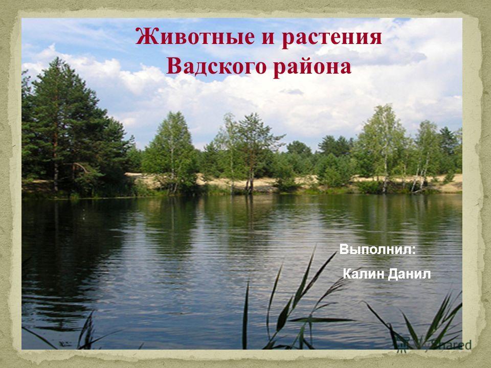 Животные и растения Вадского района Выполнил: Калин Данил