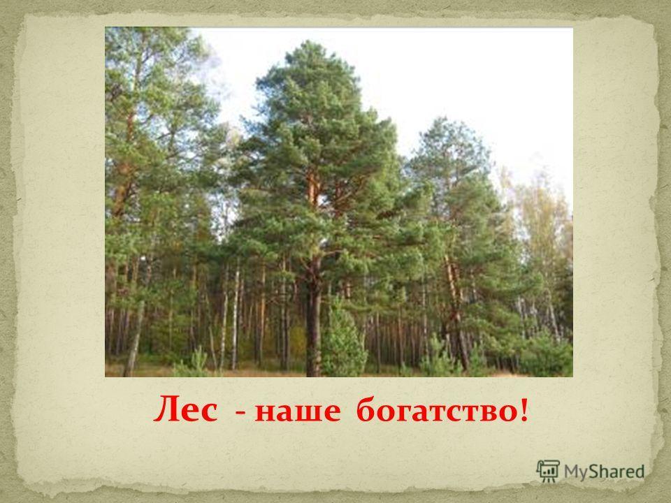 Лес - наше богатство!