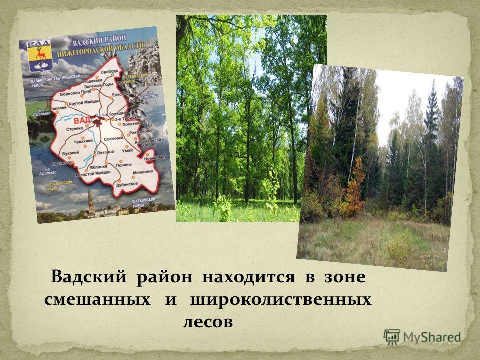 Вадский район находится в зоне смешанных и широколиственных лесов