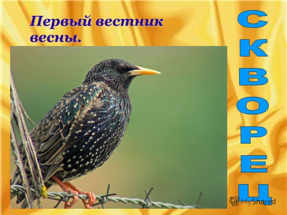 Первый вестник весны.