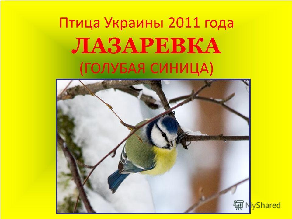 Птица Украины 2011 года ЛАЗАРЕВКА (ГОЛУБАЯ СИНИЦА)