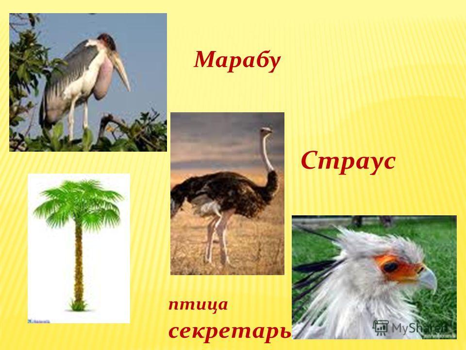 Марабу Страус птица секретарь